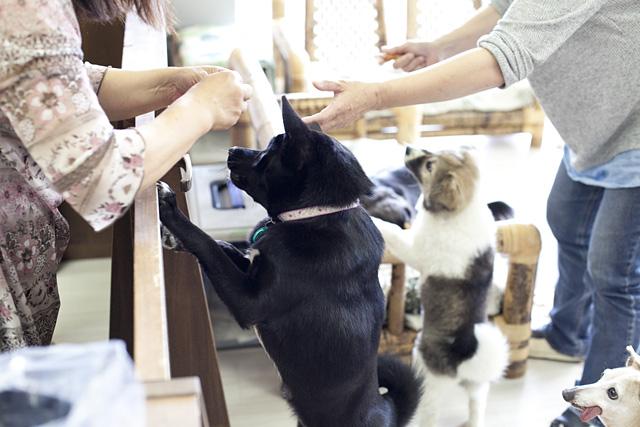 ワンニャンふれあいルーム 山梨オギノリバーサイド店内の猫カフェ