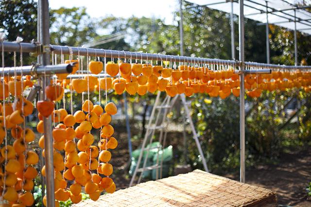 山梨県特産物のころ柿(枯露柿)